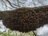 Beautiful Swarm