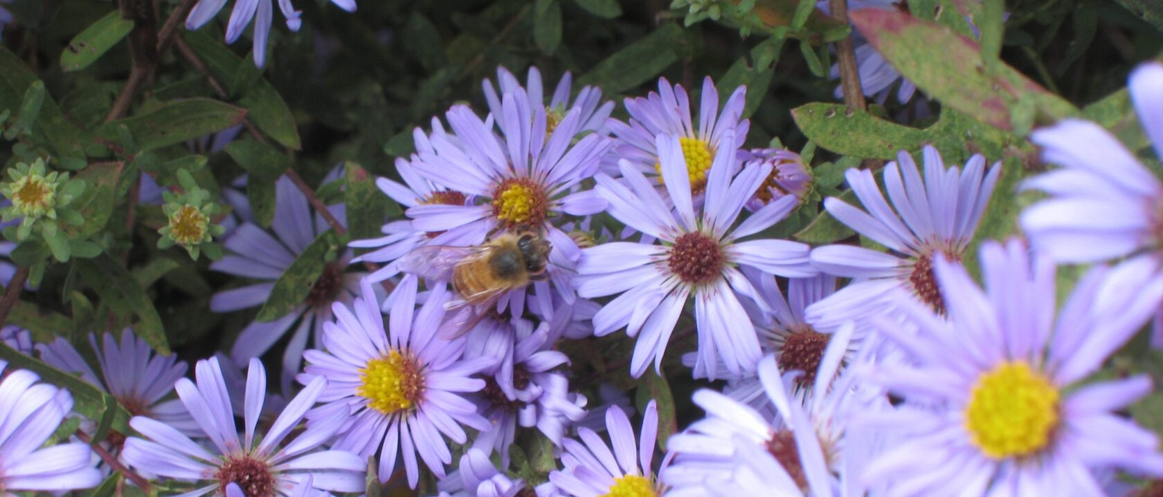 Orange County Beekeepers Association