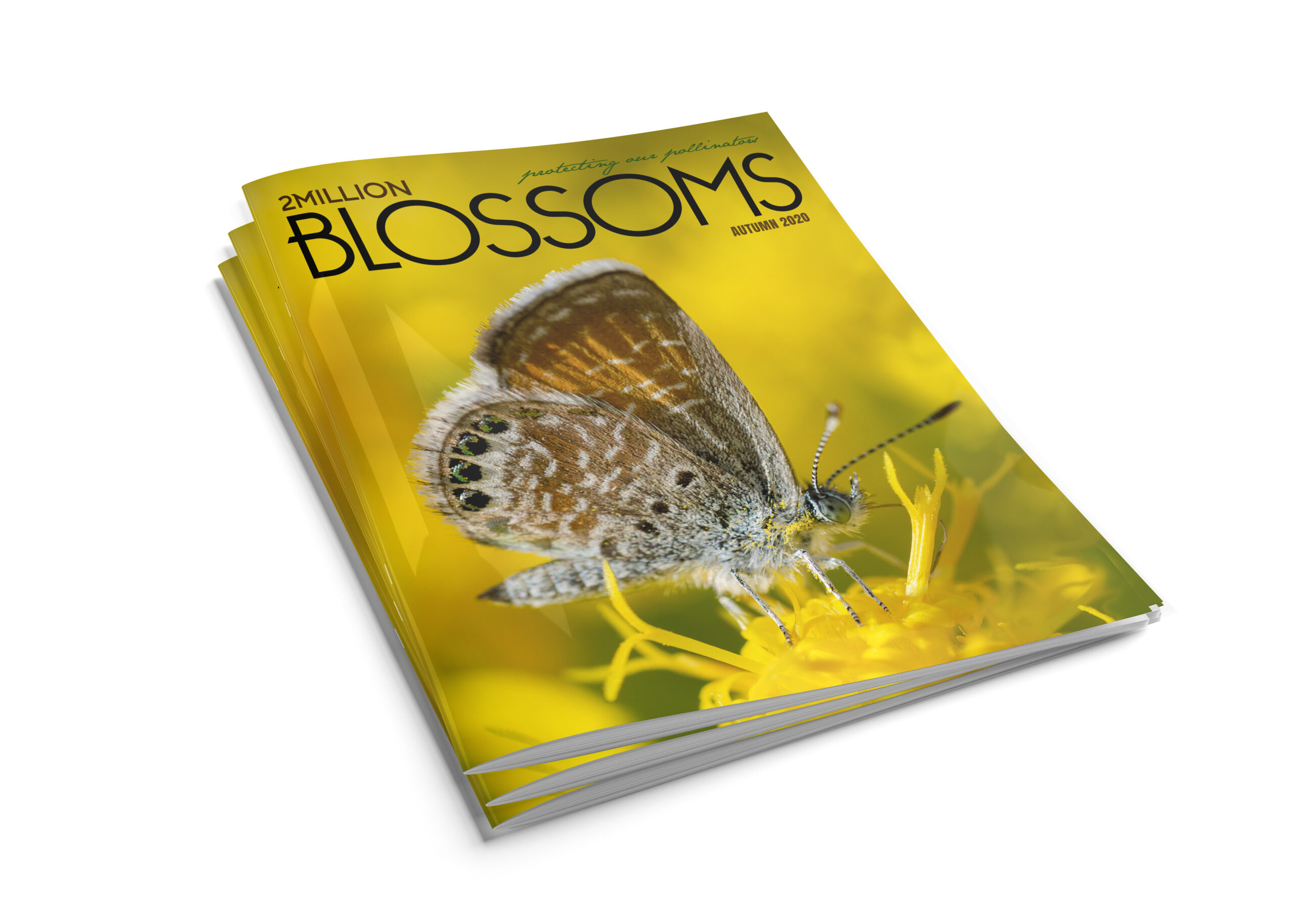 1 year subscription to 2 Million Blossoms magazine